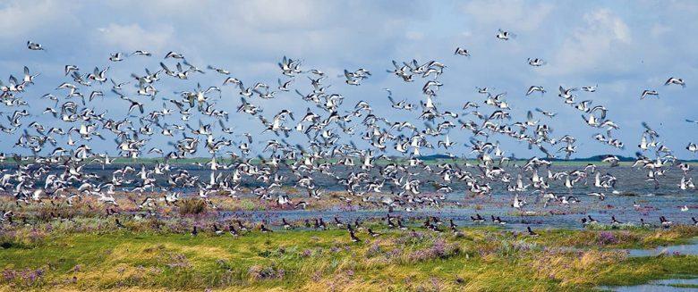 Milieu-eiland Borkum